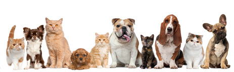 Comprehensive animal healthcare for all breeds, big and small